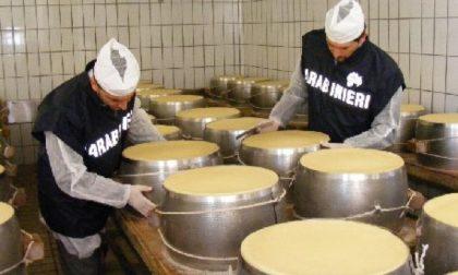 Frode alimentare 18.000 forme di Parmigiano Reggiano contraffatte