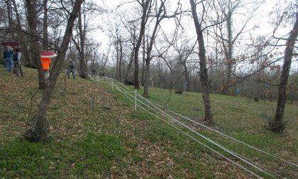 Area di interesse paesaggistico: taglia 40 piante, denunciata