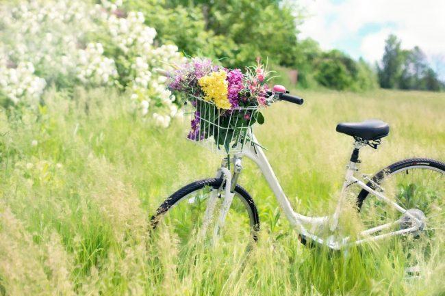 Gita in bicicletta a caccia di arte e cibi del territorio Mantovano