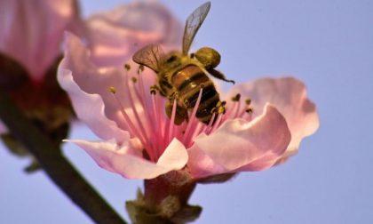 Maltempo Lombardia api in tilt per freddo e pioggia