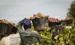 Caporalato in azienda agricola, arrestato 34enne