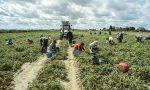 """Aziende agricole e Covid, nessuno dei nuovi lavoratori """"tamponati"""" è positivo"""
