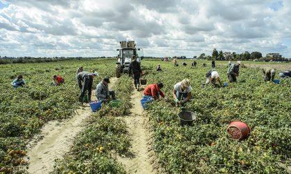 Blitz in azienda agricola denunciato imprenditore