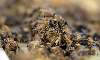 Brucia nido di vespe e si ustiona, muore dopo 6 giorni