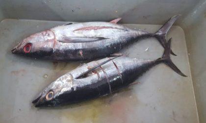 Controlli sul pescato a Mantova, 6mila euro di verbali e un ristorante chiuso