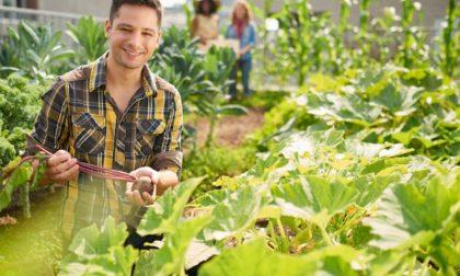 ITS Agroalimentare, via libera da Regione Lombardia al secondo corso