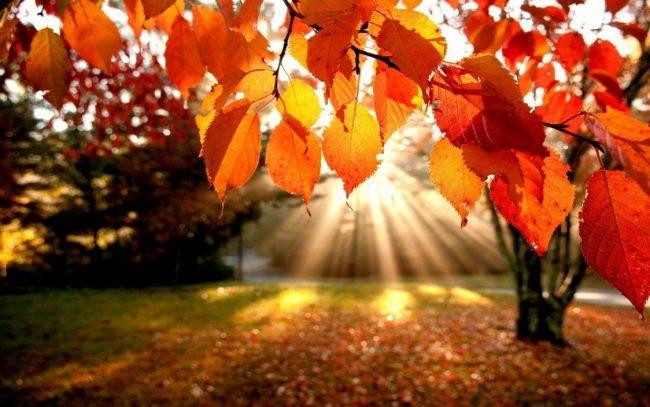 Equinozio d'autunno, quest'anno l'estate finisce il 23 settembre e non il 21