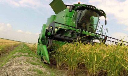 Raccolta riso al via con il 10% in meno di superfici coltivate