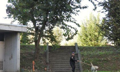 Scuole sicure: carabinieri nelle scuole con i cani antidroga