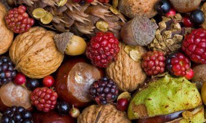 """""""Eat Original, scegli l'origine"""": oggi a Mantova puoi tutelare il tuo territorio"""