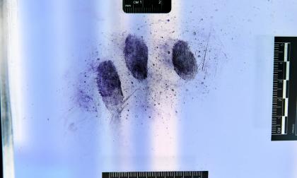 Furti al Poma e in scuole cittadine: incastrato dalle impronte digitali
