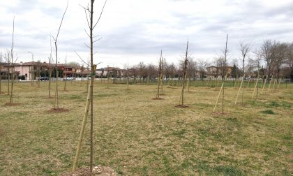 Bosco urbano Porto Mantovano: piantati 620 nuovi alberi FOTO