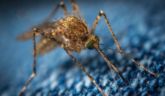 Come prevenire la diffusione delle zanzare? Un incontro pubblico