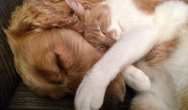Gli animali e il caldo: i consigli su come proteggerli