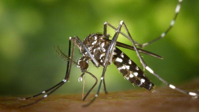 Il Veneto ha (quasi) vinto la battaglia contro il West Nile Virus
