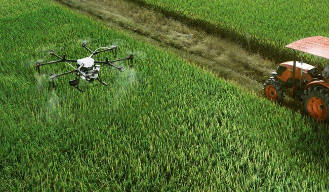 Giovani in agricoltura, finanziate per 480mila euro 24 aziende mantovane