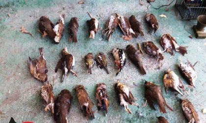 """Operazione """"Pettirosso"""", predavano specie protette: 4 cacciatori denunciati"""