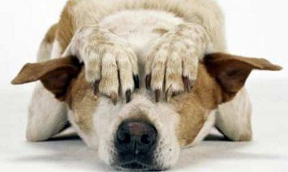 Botti di Capodanno: vademecum Lav per proteggere gli animali durante le festività