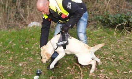 A Castiglione insegnano ai cani come trovare le persone scomparse