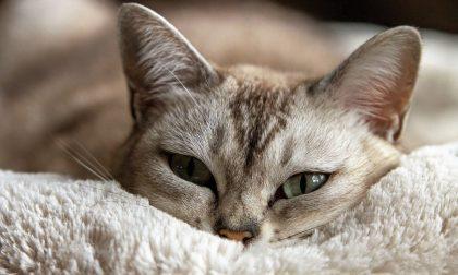 Miao, oggi è la Giornata Nazionale del Gatto
