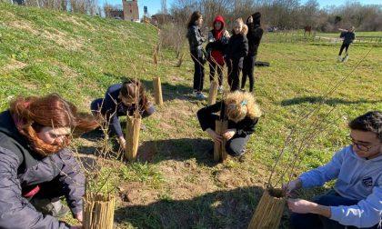 Cittadinanza attiva, gli studenti delle superiori curano parte del Parco del Mincio