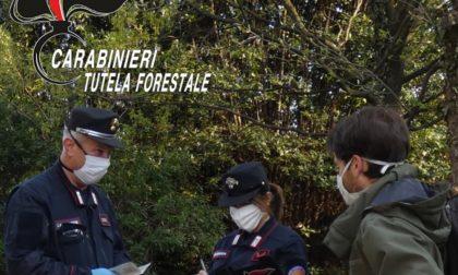 Carabinieri Forestali all'opera per scovare i furbetti di Pasqua e Pasquetta FOTO