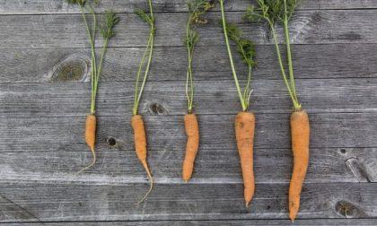In quarantena si torna a coltivare l'orto: si può anche se è fuori dal proprio Comune