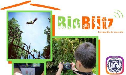 """""""Bioblitz, Lombardia da casa mia"""": la proposta per godere le bellezze della natura ai tempi del Coronavirus"""