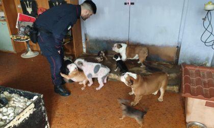 """Traffico di cuccioli: scoperto allevamento abusivo di cani di """"razza"""" provenienti dall'Est FOTO"""