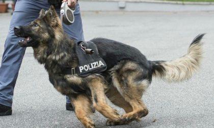 """Il cane poliziotto """"Tarol"""" scova la coca al distributore di benzina"""