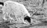 Salvare la vita al proprio cane: nel Mantovano un corso per insegnare l'indifferenza verso le esche avvelenate