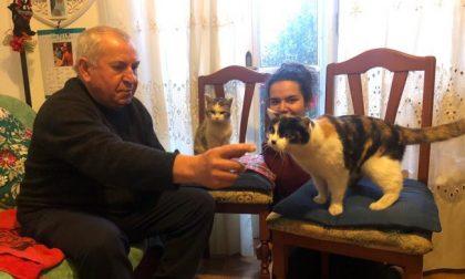 """""""Lilli"""" è la gatta da record: ha compiuto ben 25 anni FOTO"""
