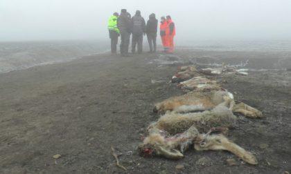 80enne mantovano avvelena e uccide centinaia di animali selvatici: ma non dovevamo essere migliori?