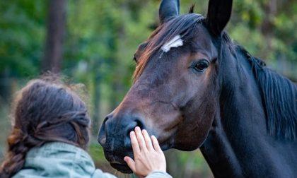 Lo stress da lockdown si combatte con la ippoterapia: cavalli in azione contro ansia e depressione