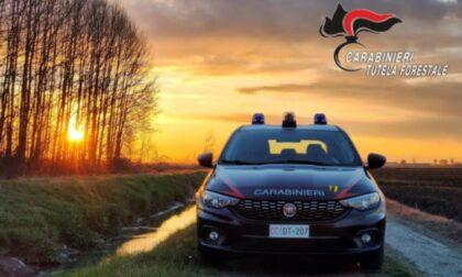 70enne tenta un gesto disperato, salvato in extremis dai Carabinieri