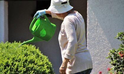 """Ladro """"di giardini"""" in azione ad Asola, incastrato dalle telecamere"""