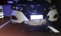 Cane miracolato: investito a 130 km/h si è salvato incastrato nel radiatore