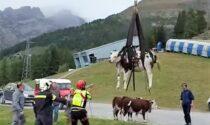 Precipitano in un dirupo: quaranta mucche morte. Il video del recupero delle superstiti
