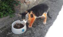 Gatto randagio dipinto di arancione: la denuncia shock dell'Enpa