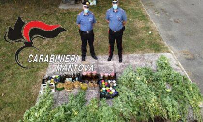 Una piantagione di marijuana nel cortile di casa, sequestrate 53 piante di cannabis